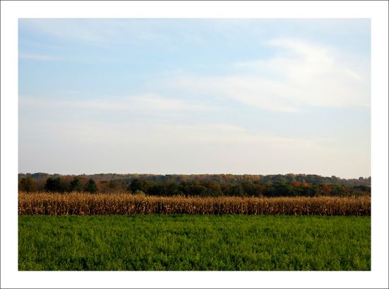 IMG_0179a