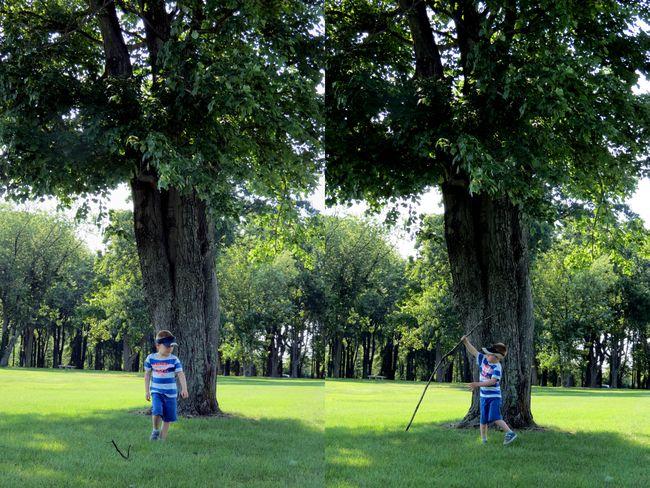 Tree-07-14